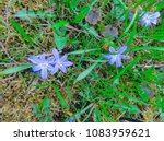 decorative flowering plant from ... | Shutterstock . vector #1083959621