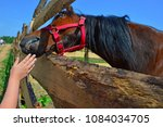 Small photo of horse caressing by hand