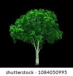beautiful shrub bush lonely... | Shutterstock . vector #1084050995