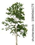 treetop leaf green tropical... | Shutterstock . vector #1084066175