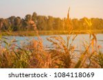 Small photo of Reeds in the foreground near a river in sunlight at sunset. Dry reed on the river in the sunshine. Reed in the evening on the river bank. Golden cane. Toned photo.