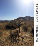 Small photo of ?acti in the Arizona desert. Arizona. USA