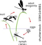 life cycle of dragonfly.... | Shutterstock .eps vector #1084164881