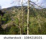 beautiful example of nature | Shutterstock . vector #1084218101
