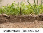 soil cut and growing plant with ... | Shutterstock . vector #1084232465