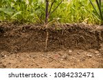 soil cut and growing plant with ... | Shutterstock . vector #1084232471