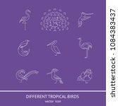 birds are different species....   Shutterstock .eps vector #1084383437