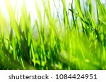 natural green grass. the rays... | Shutterstock . vector #1084424951