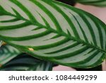 close up of the leaves of... | Shutterstock . vector #1084449299