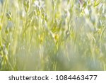 nature background. spring time...   Shutterstock . vector #1084463477