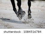 horse legs during a dinamic... | Shutterstock . vector #1084516784