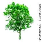 shrubs beautiful bush isolated  ... | Shutterstock . vector #1084589501