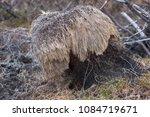 strange sedge tussock like... | Shutterstock . vector #1084719671