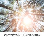 pine trees in the middle of the ... | Shutterstock . vector #1084843889