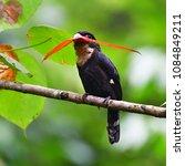 beautiful black bird  dusky...   Shutterstock . vector #1084849211
