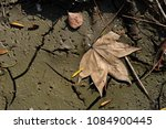 Mud Surface With Dry Forest...