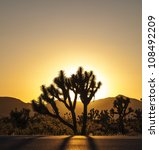 Joshua Trees With Mountains In...