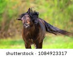 bay horse flies off the flies... | Shutterstock . vector #1084923317