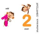 opposite odd and even vector... | Shutterstock .eps vector #1084972169