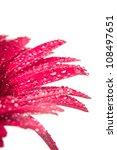 pink gerbera with macro drops... | Shutterstock . vector #108497651