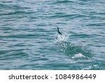 sailfish jumping on the sea... | Shutterstock . vector #1084986449