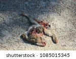 Small photo of A Road killed Rabbit on the asphalt