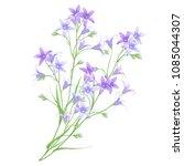 bunch of bellflowers  hand... | Shutterstock .eps vector #1085044307
