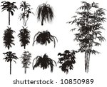 bamboo and other tropical plant   Shutterstock .eps vector #10850989