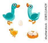 farm birds family cartoon flat...   Shutterstock .eps vector #1085114429