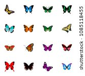 set of butterfly realistic... | Shutterstock .eps vector #1085118455