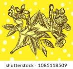 handroanthus impetiginosus.... | Shutterstock .eps vector #1085118509