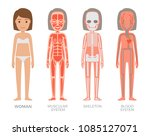 woman muscular skeleton blood... | Shutterstock .eps vector #1085127071