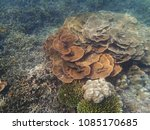 a lot of coral reefs underwater ... | Shutterstock . vector #1085170685