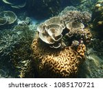a lot of coral reefs underwater ... | Shutterstock . vector #1085170721