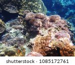 sea anemones corals and a lot... | Shutterstock . vector #1085172761