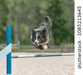Small photo of Border Collie jumps over an agility hurdle in agility competition