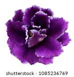 flower violets  on a white... | Shutterstock . vector #1085236769