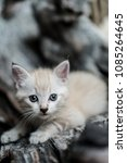 Small photo of Small adorable kitten with blue eyes outdoor