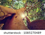 Small photo of Head high up in the trees. Nature lover look up to the sky through the branch of tree, sun is shining through the leave and branches of big tree.Close up to the tree trunk.Beautiful nature photo.