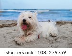Dog In Holiday At The Beach In...