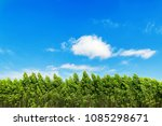 field trees and blue sky | Shutterstock . vector #1085298671