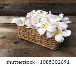 flower arrangement  plumeria... | Shutterstock . vector #1085302691