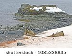 Small photo of Penguins waddle past the wreck of an old whaling boat on the shore at Half Moon Island in the South Shetland Islands.