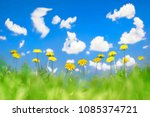 yellow dandelions in a green... | Shutterstock . vector #1085374721
