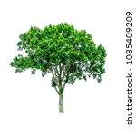 shrubs beautiful bush isolated  ... | Shutterstock . vector #1085409209