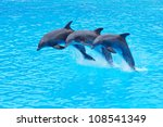 Three Bottlenose Dolphins ...