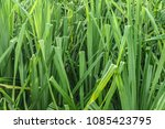 close up of exotic tropical... | Shutterstock . vector #1085423795