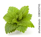 Peppermint or  mint bunch isolated on white background cutout - stock photo