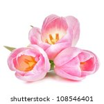 Pink Tulip Isolated On White...