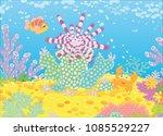 striped long spine sea urchin ... | Shutterstock .eps vector #1085529227
